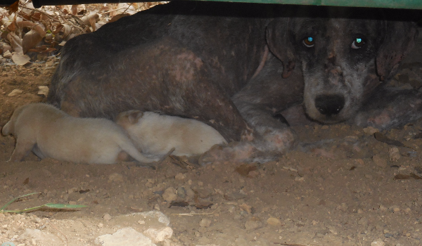 Hope and her six puppies