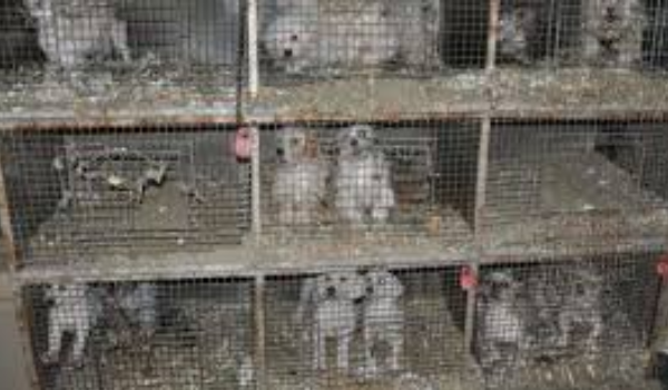 Missouri Puppy Mill Rescue Mission