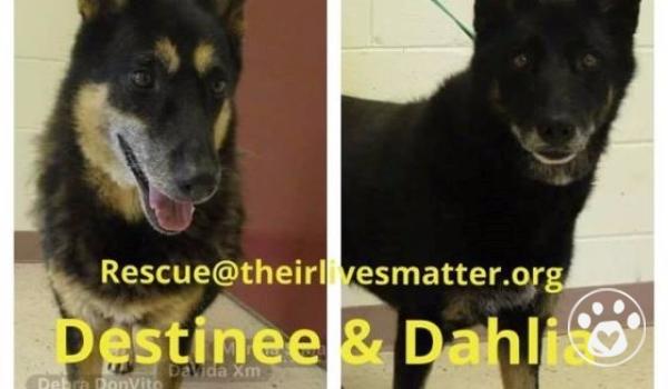 Sisters: Destinee & Dahlia