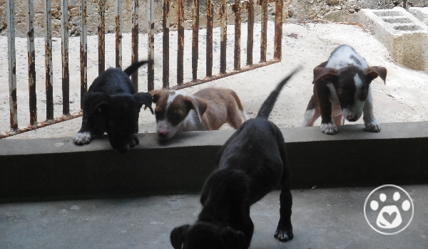 Six puppies left on their own needing medical attention