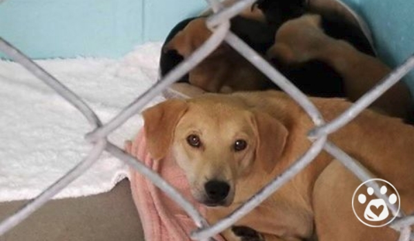 Urgent! Mom and Pups Rescued From Neglect!