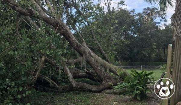 Hurricane Irma Recovery Fund