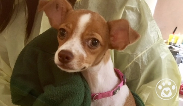 Save Sophie from Parvo!