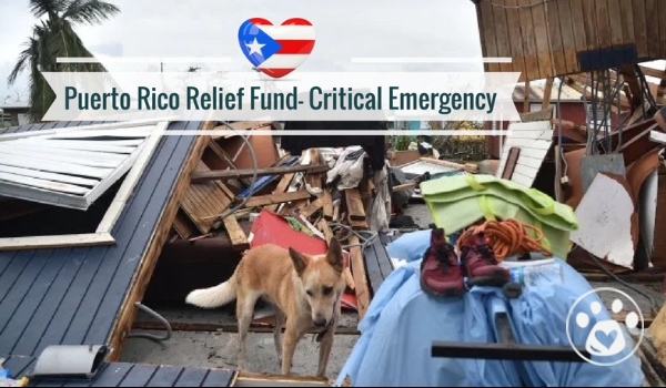 Puerto Rico Relief Fund