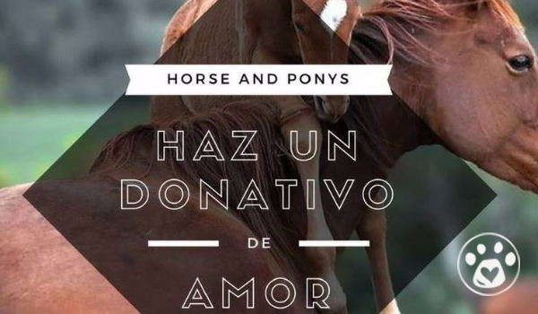 Horse and Ponys Se Levanta!