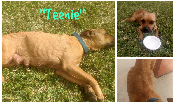 Teenie has been taken to hospital for immediate care !