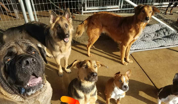 Lexi, Scooby, and Max