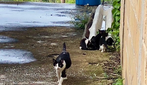 Puerto Rico Street Cats TNR Project