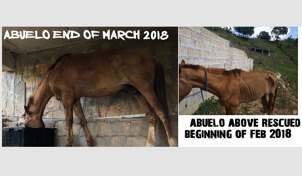 Abuelo (Grandpa) A Rescued Horse