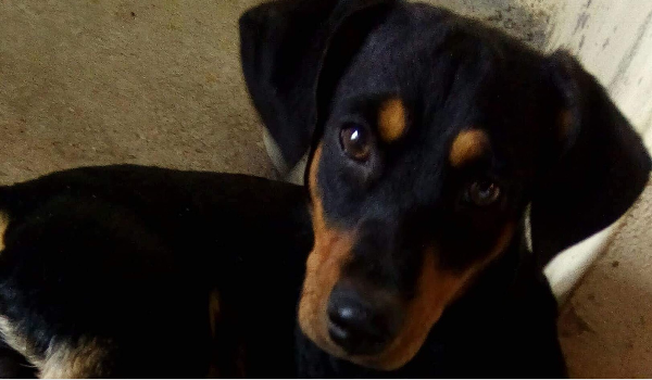 Marii's Street Rescued Dogs