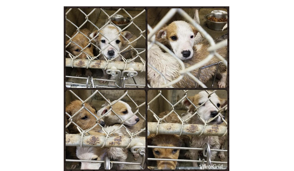 5 TEXAS PUPS SAVED FROM DEATH ROW