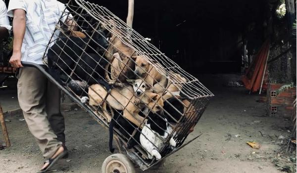 Dog Meat Trade Transportation