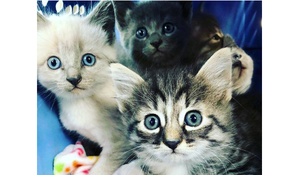 Warrior Kittens!
