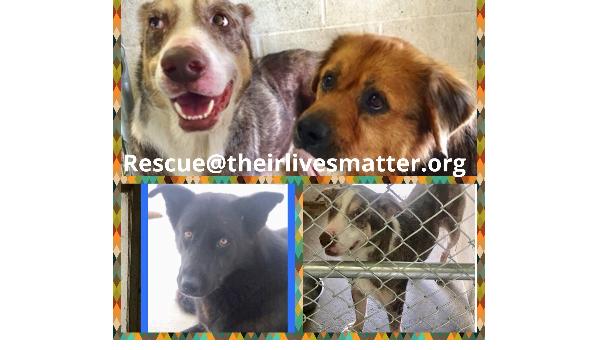Texas death row dogs Stallone , Ernie , Barnie