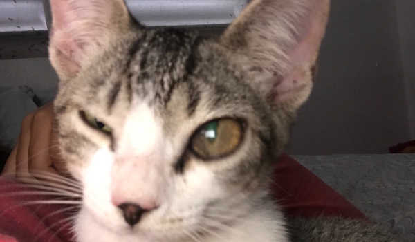 Kitty - Likely Mistreated & Attacked by Dog