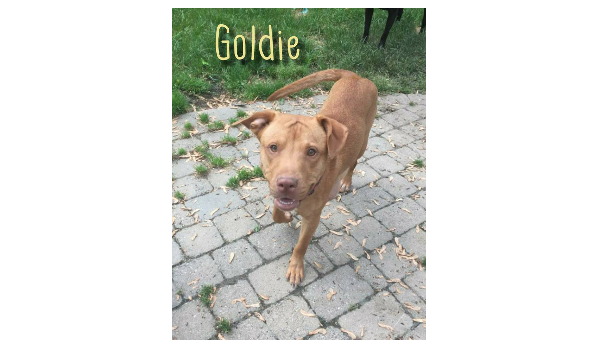 Goldie and her bundle of 6