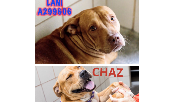 Lani and  Chaz siblings saved 20 min before euthanasia