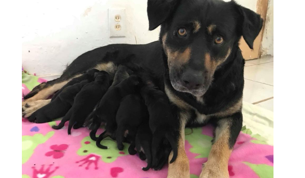 Mama and 12 puppies