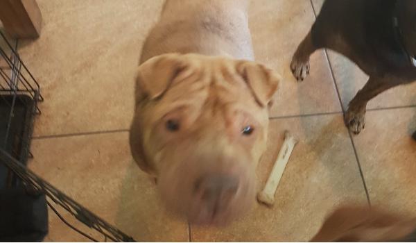 Winston