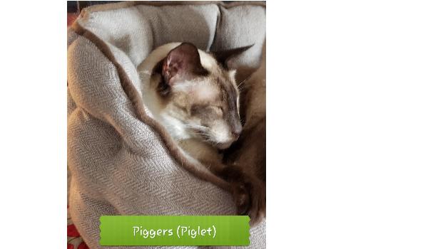Piggers