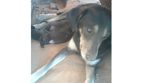Mom and Puppies