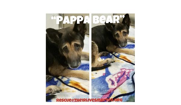 Pappa Bear