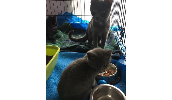 110 Kittens