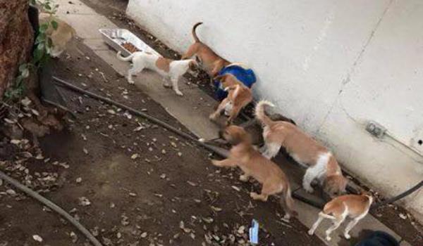 Hoarding Dogs