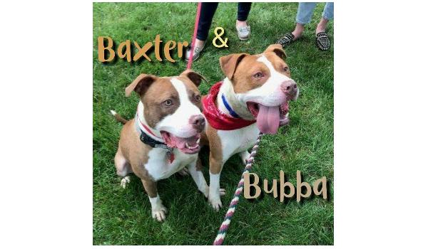Baxter and Bubba