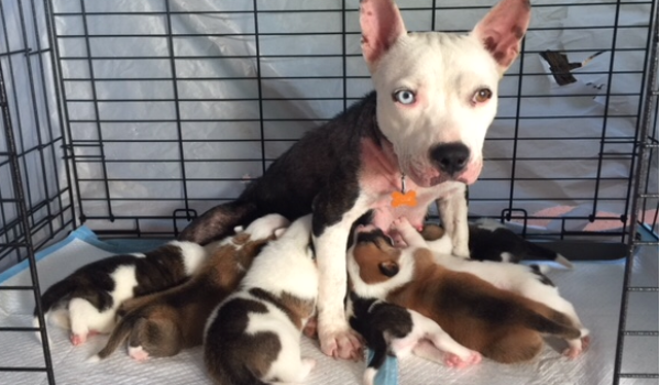 Phillie and her litter of 7