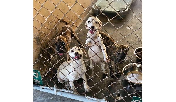 4 Florida puppies SAFE !