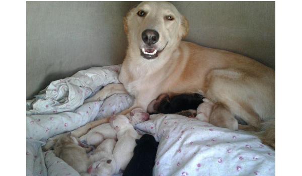 Bella & 10 babies
