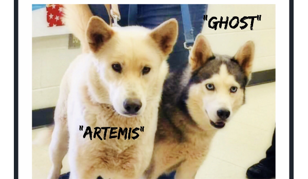 Artemis and Ghost saved feom death row barely in time