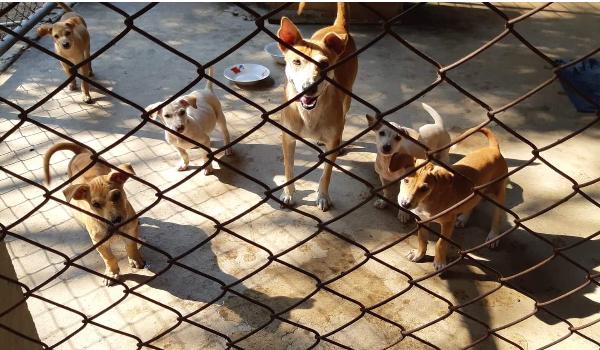 Tina & Pups