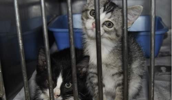 2 young kittens in shelter