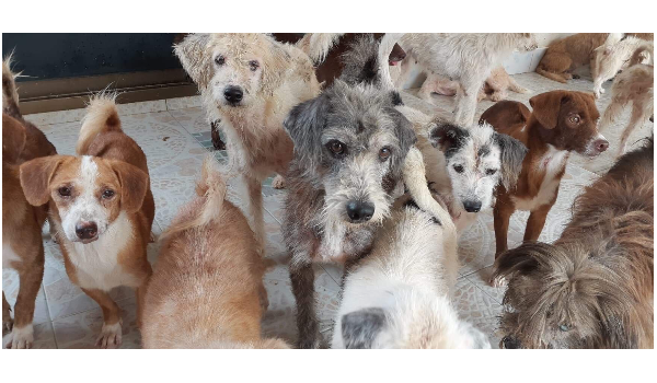 Neglected, trapped dogs