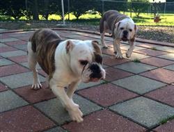 Tillie & Millie