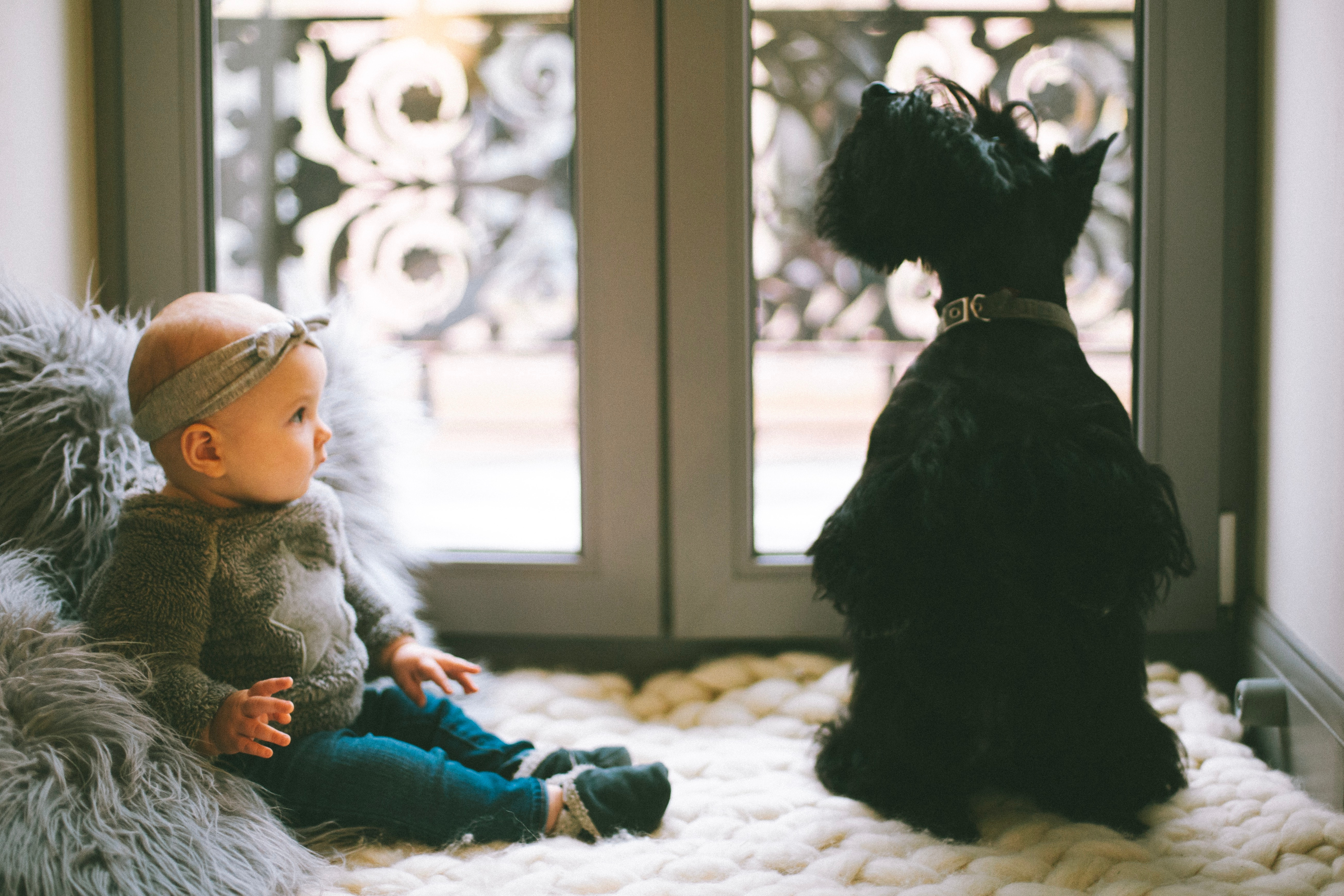 baby with black scotty dog