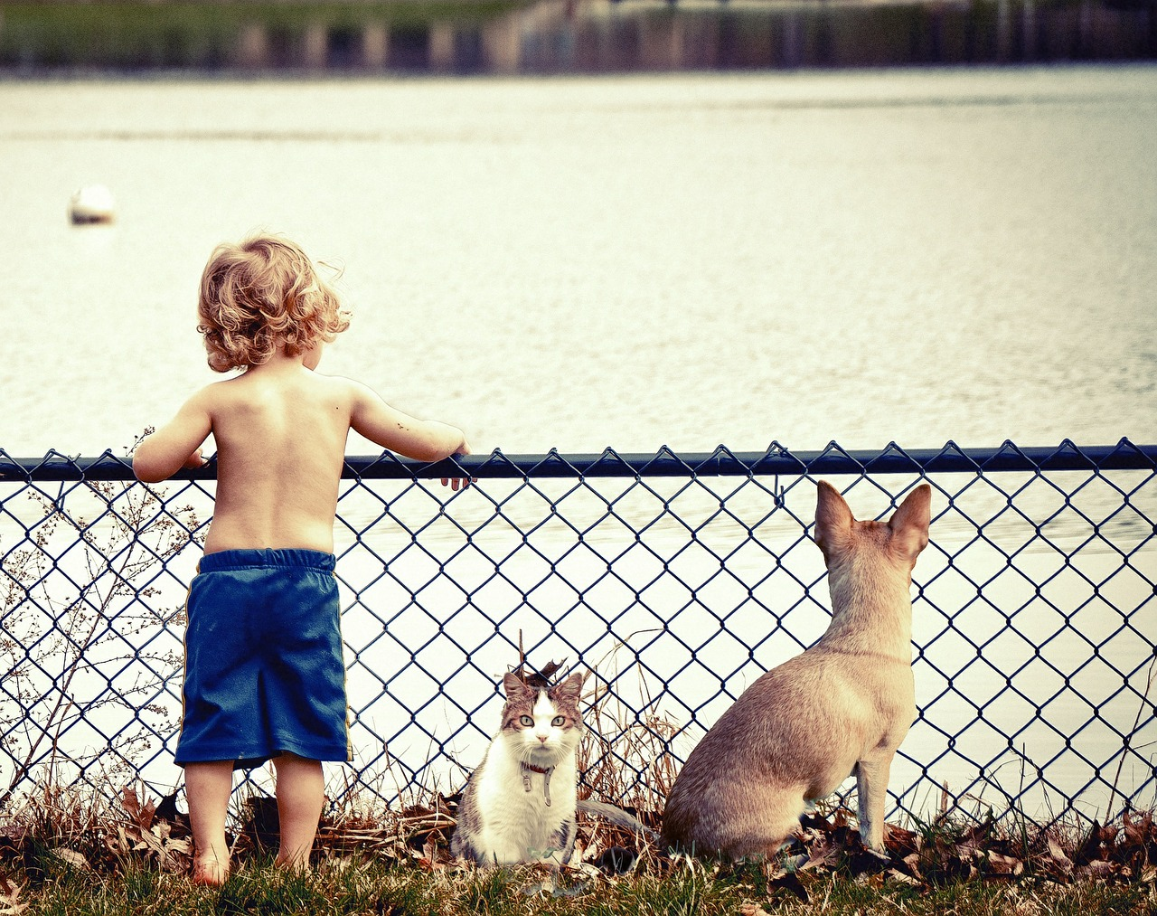 young boy with dog and cat