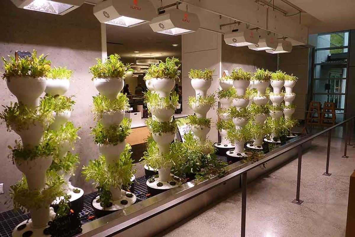 Microsoft Installs Foody Towers in Restaurants | Grower\'s Resource Blog