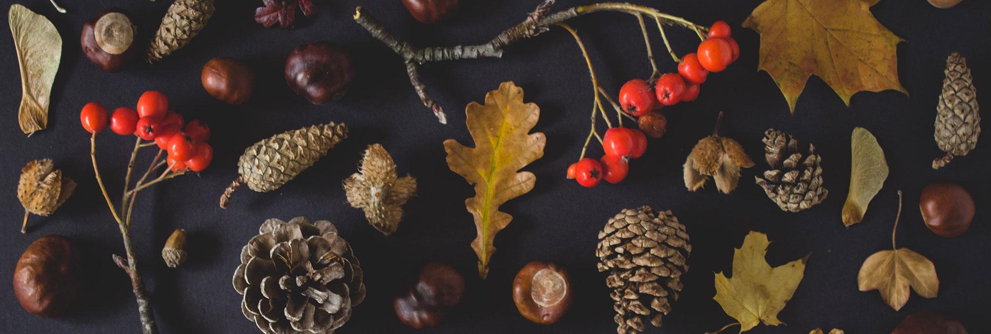 Thanksgiving blog banner 2018