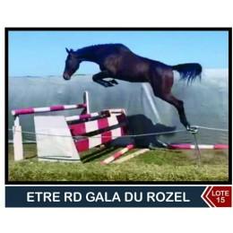 Lote 15: Etre rd Gala Du Rozel