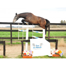 Lote 2: GP LOLLY POP