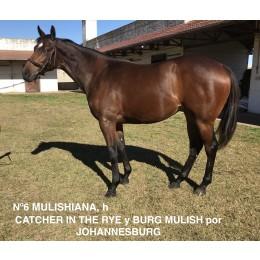 Lote 6: MULISHIANA