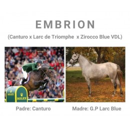 Lote 1: EMBRION