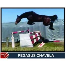 Lote 12: Pegasus Chevala