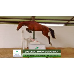 Lote 6: Jos Great moon de Kannan