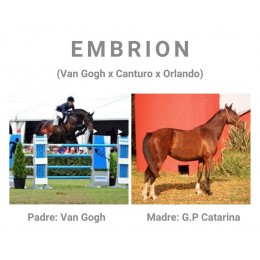 Lote 2: EMBRION