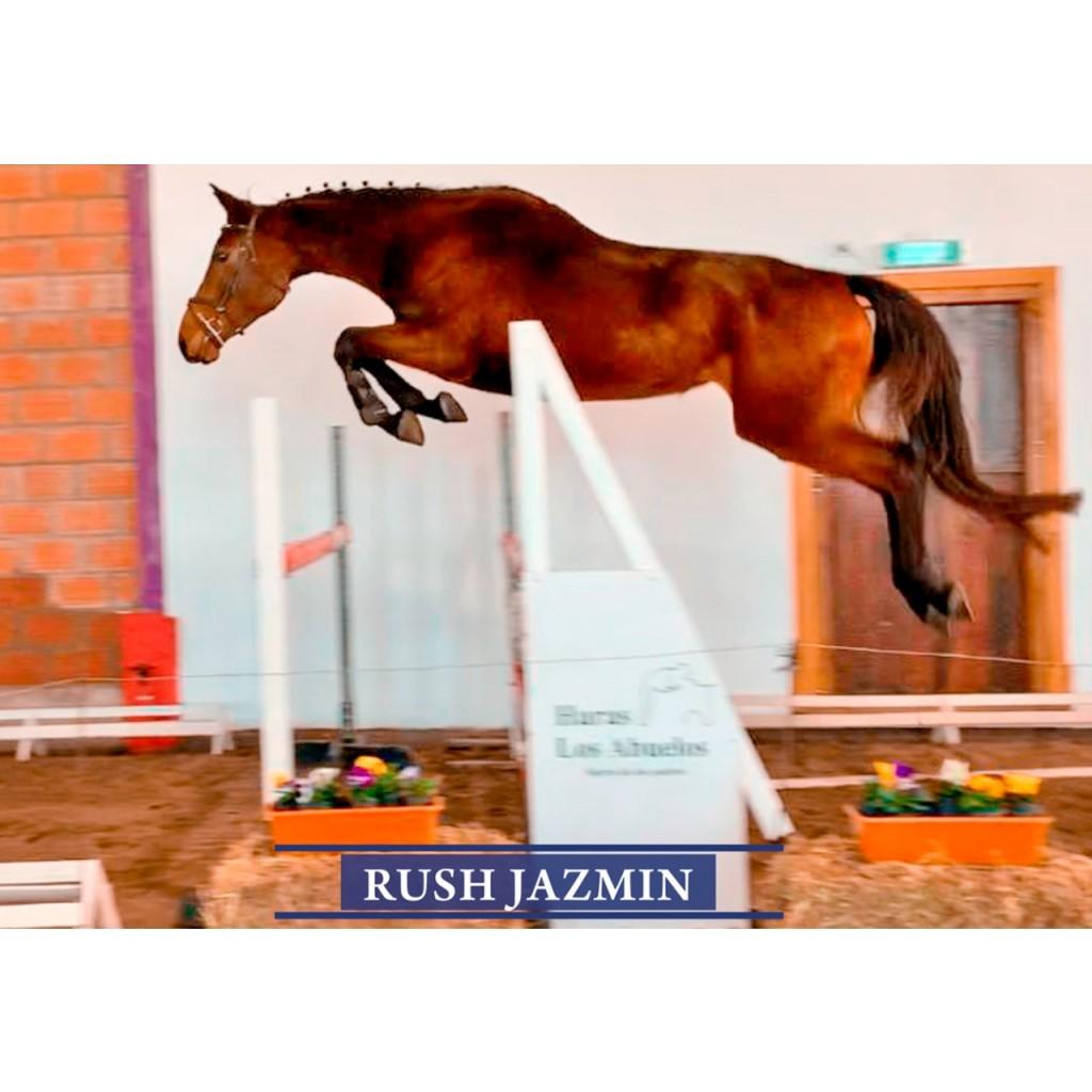 Lote 4: Rush Jazmin