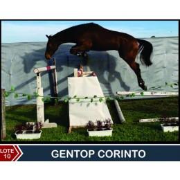 Lote 10: Gentop Corinto